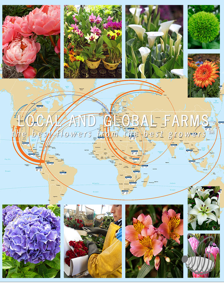Floral Industry Consulting - Farm Management